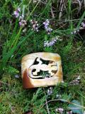 Armspange Eidechse aus Naturhorn